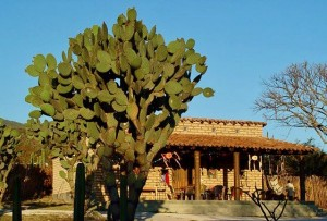 Blue winter skies at Rancho Pitaya